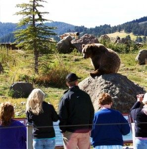 Members of the public learning about Grizzlies at Montana Grizzly Encounter (Picture from Montana Grizzly Encounter)